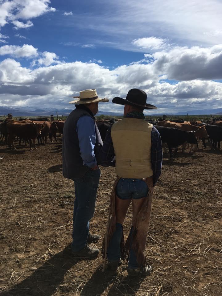 NV_working cows_Duane Coombs.jpg