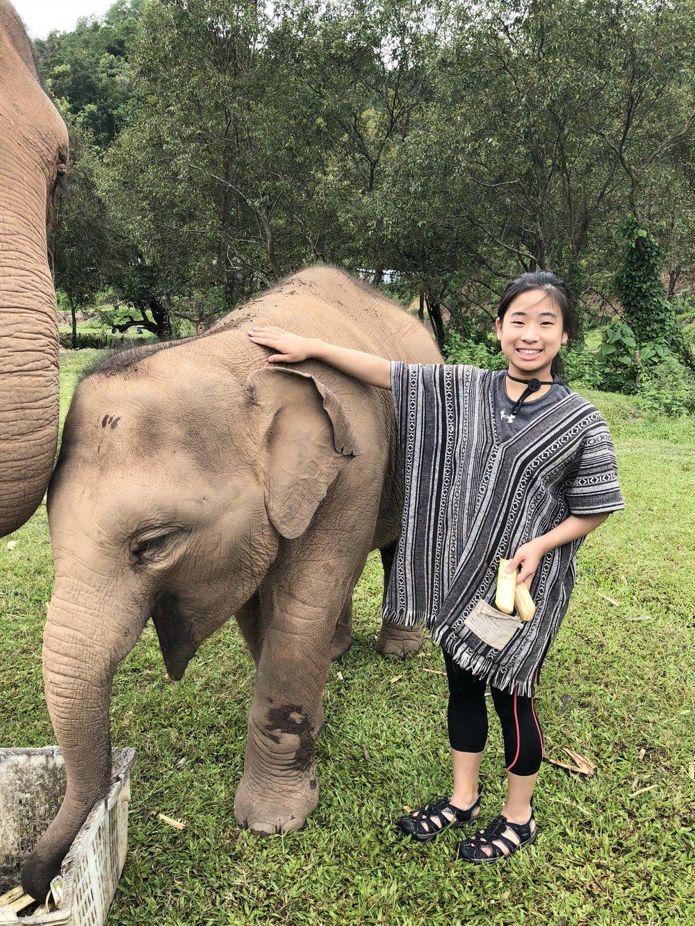 4 elephant Ariana.jpg