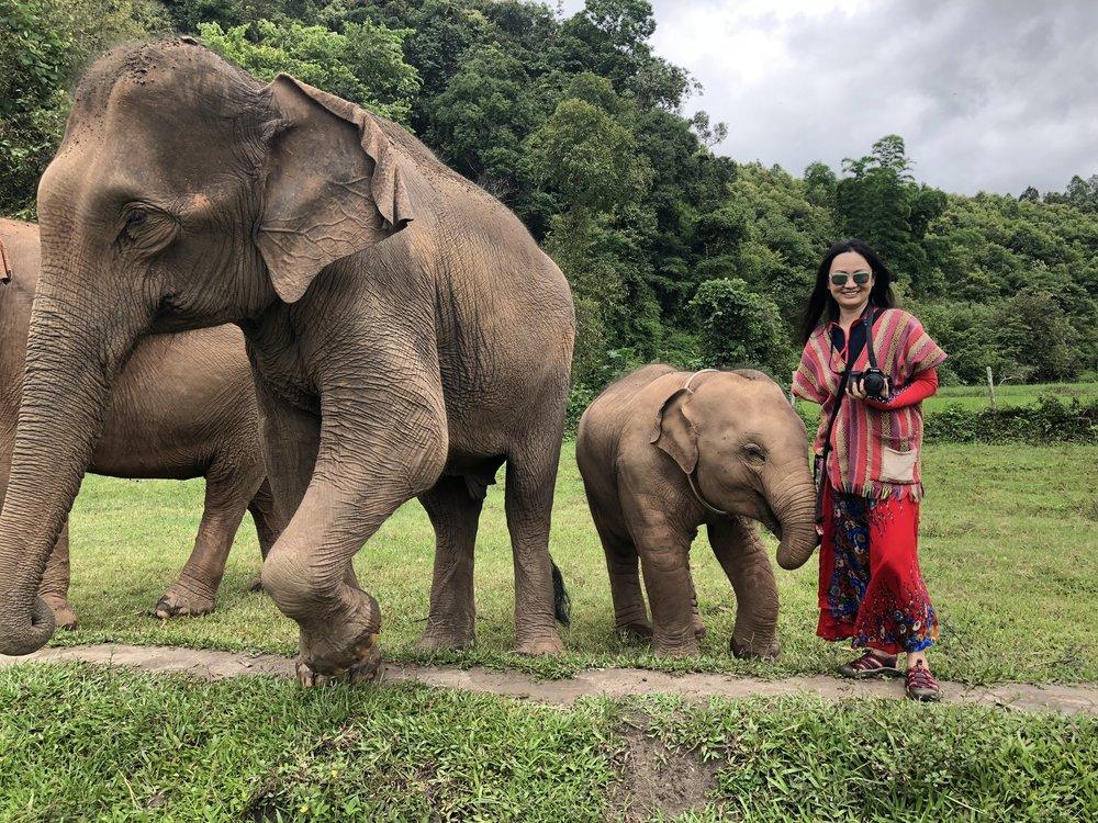 BSL Baby Elephant.jpg