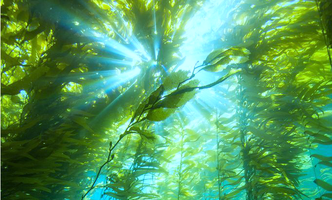 Kelp_Forest_crop2.png