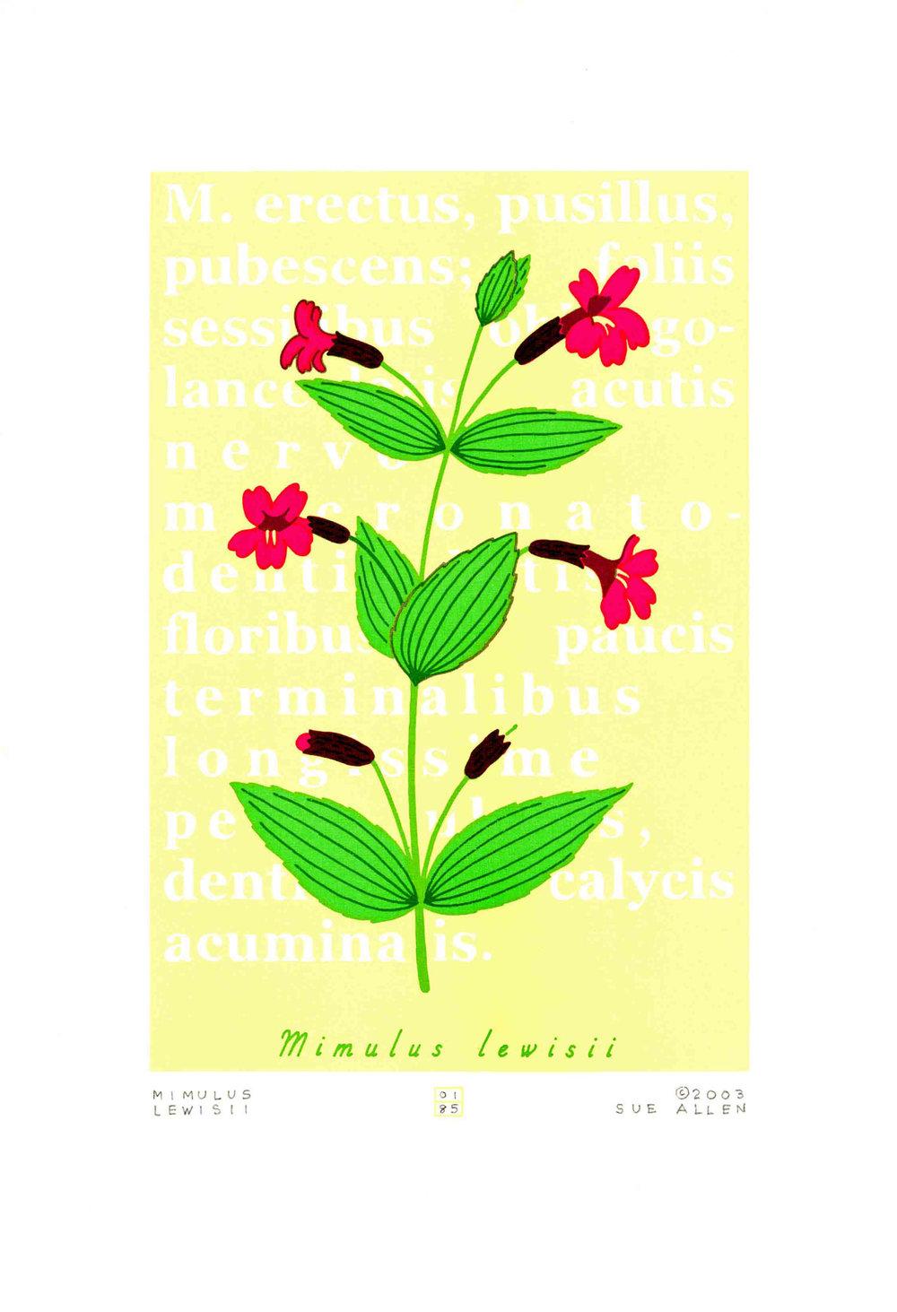 MIMULUS LEWISII- LEWIS' MONKEYFLOWER
