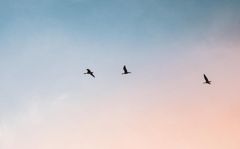birds_crop.jpg