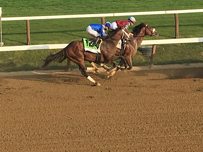 Travers Horses.JPG