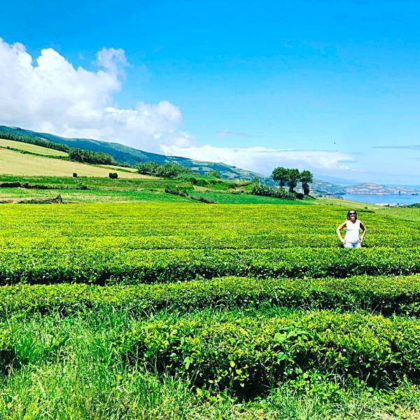 Me in Cha Gorreana tea fields.JPG
