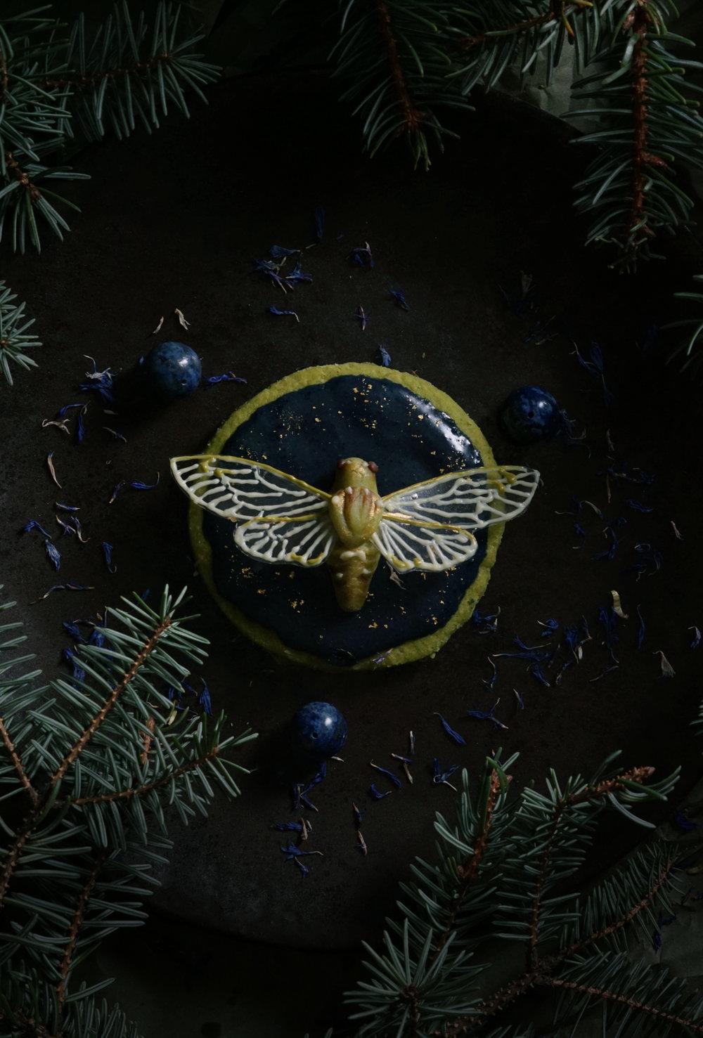 cicada cookie 3.jpg