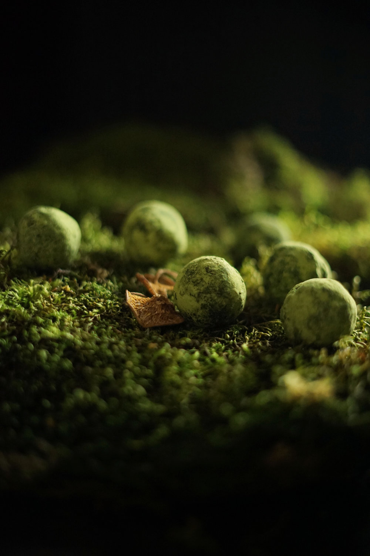moss truffles 4 small.jpg