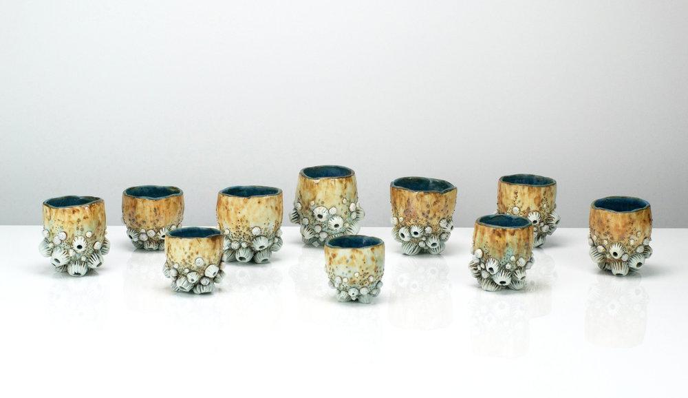 barnacle cups cover.jpg