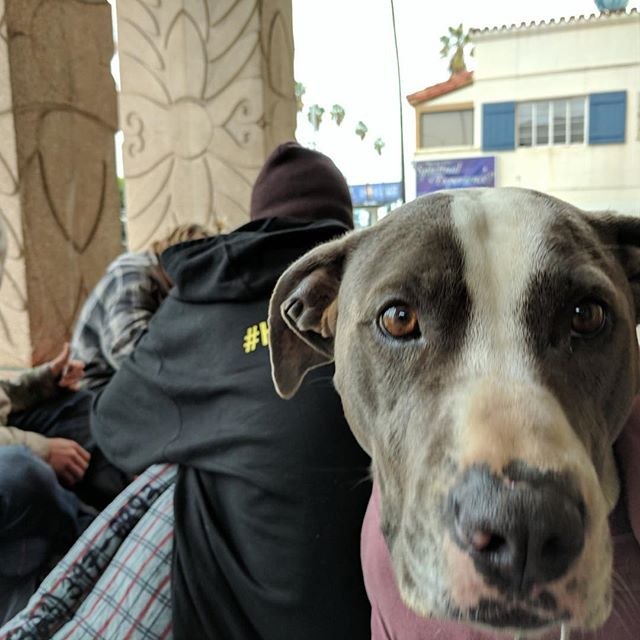 Thousands of pets keep their homeless owners company on the streets⠀ #homelessness #livingonthestreet #homelesspets #homeless #advocacy #losangeles #donate #anythinghelps #change #pets #petsofinstagram