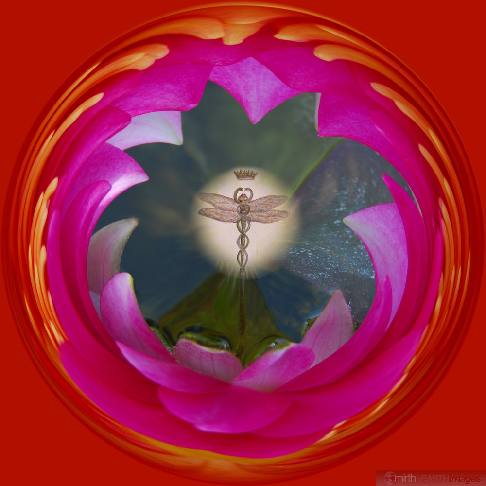 Lotus Nature of Caduceus 6639.jpg