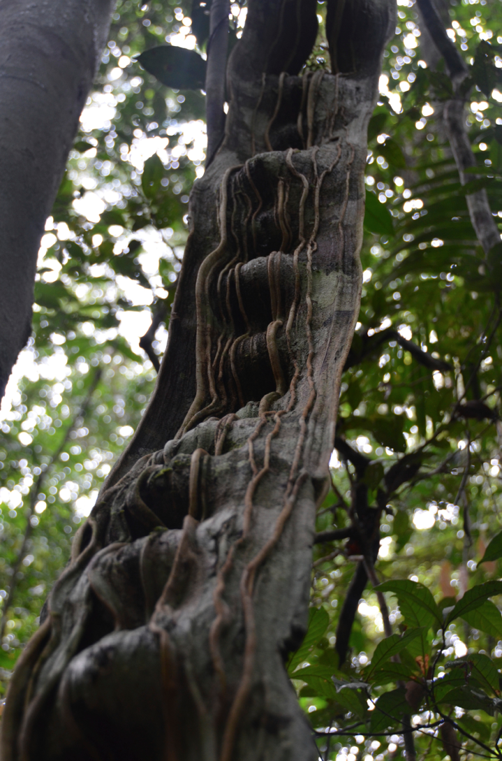 a monkey ladder