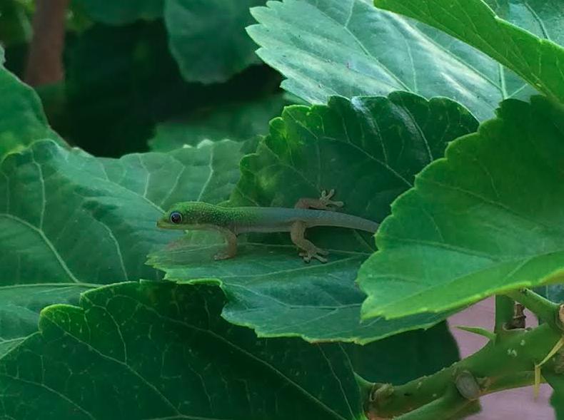 a tiny lizard