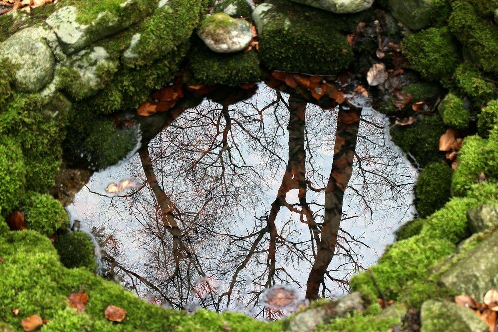 nature-254951_1920.jpg