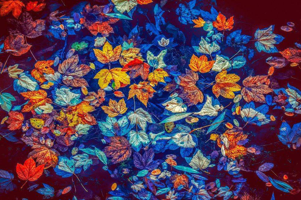 fall-leaves-3744649_1920 (1).jpg
