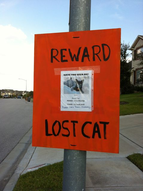 Stay aware: Posting a reward on the poster could make you a target for scammers.  Photo Credit:  Austin Cat Detective