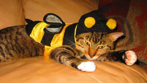 Photo Credit:  Petful via flickr