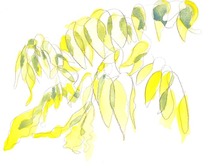 Sunlight shining through winter Wisteria leaves