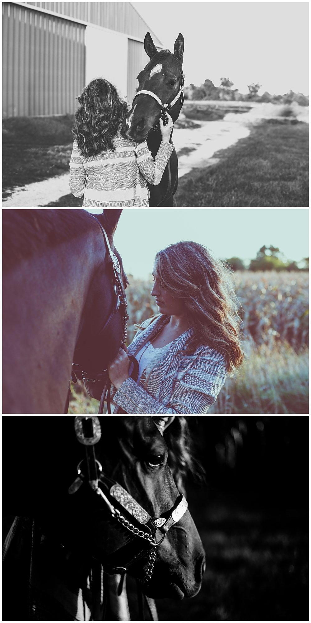 Show halter, horse love, girl and her horse