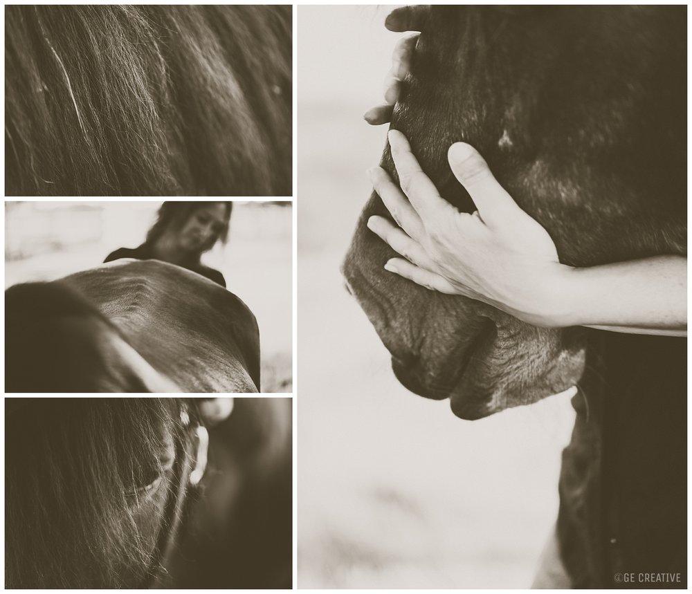 HorseMemorialSession_0009.jpg