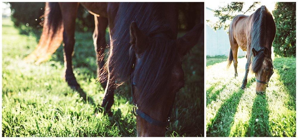 HorseMemorialSession_0017.jpg