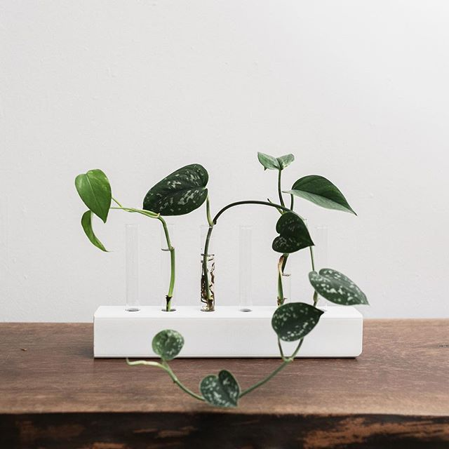 PROPAGATION STATION!! The perfect little spot to propagate your cuttings or even use as a vase for flowers! The possibilities are endless, really. Looks great on a tabletop or anywhere in your home to add to your decor. Multiple sizes and colours available! Designed by @brie.gallagher, made by @maxcosaw #shoplocal #ssm #saultstemarie #plants