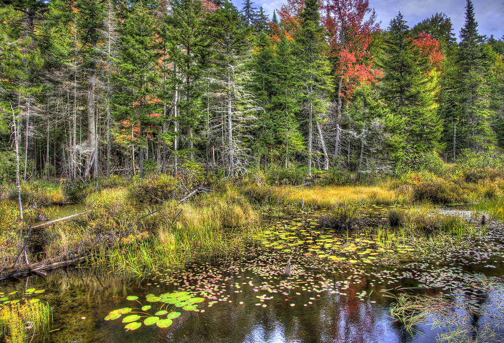 Explore the diverse ecosystems of the six million acre Adirondack park.