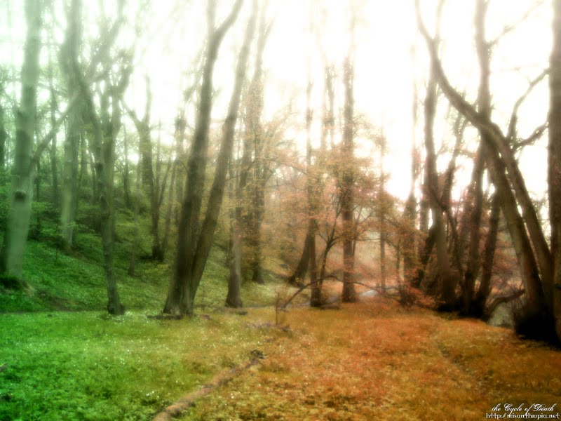 death-forest-trees-nature-31000.jpg