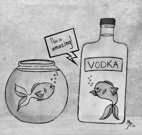 alcohol-bye-bye-fish-fun-Favim.com-3316251.jpg