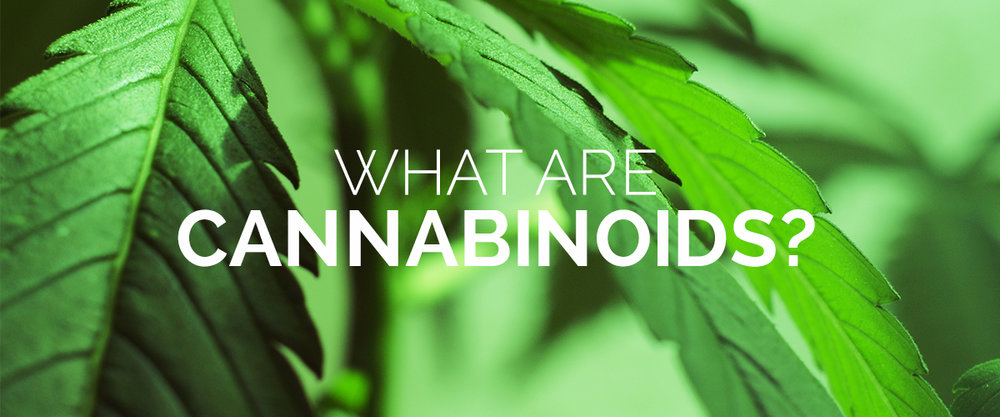 the apothecarium san francisco discusses cannabinoids
