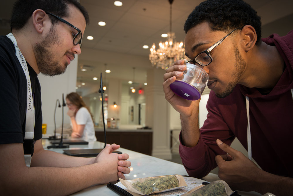 the apothecarium las vegas a recreational and medical marijuana dispensary discusses the importance of cannabinoids and the entourage effect