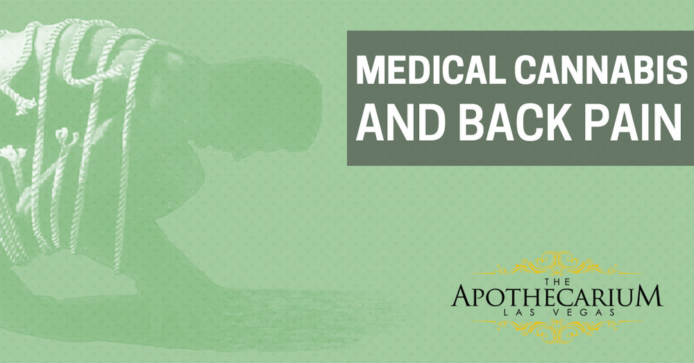 Learn more about Medical Cannabis and Back Pain at The Apothecarium.