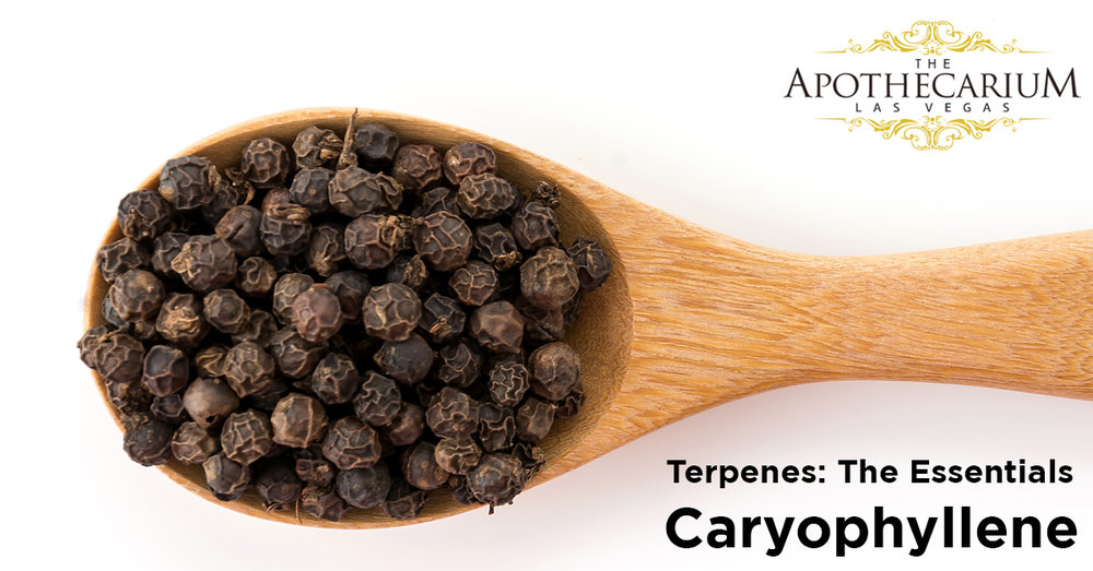 the apothecarium las vegas a recreational and medical cannabis dispensary discuss caryophyllene