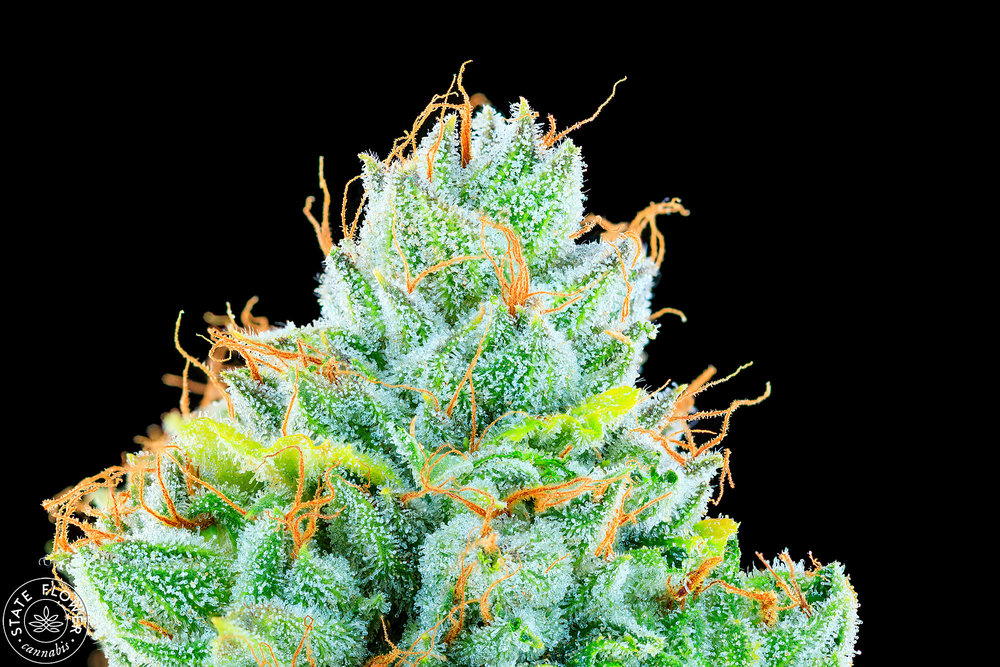 State Flower Cannabis King Louis XIII OG
