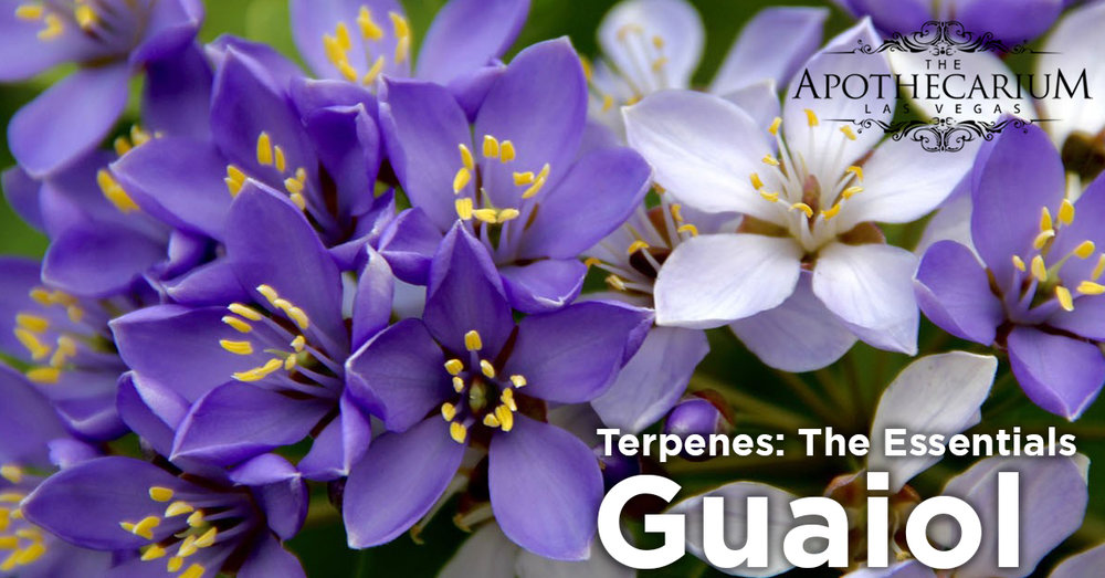 the apothecarium las vegas a recreational and medical cannabis dispensary discuss guaiol a terpene