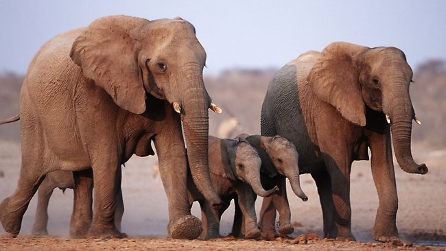 081480-elephants.jpg