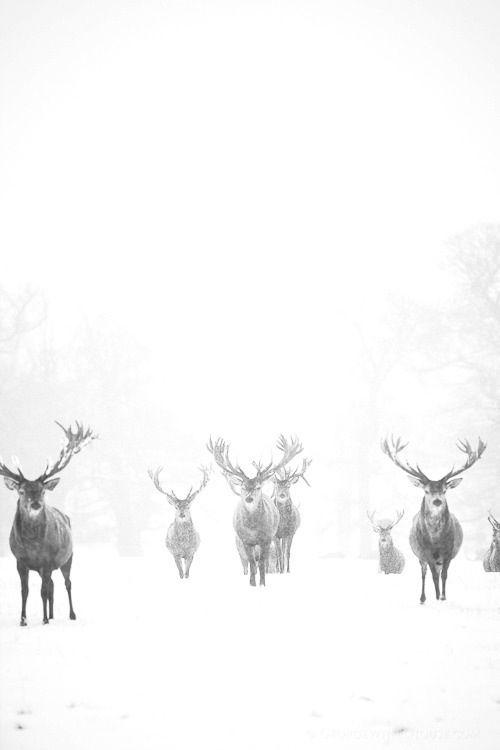 snowdeer.jpg
