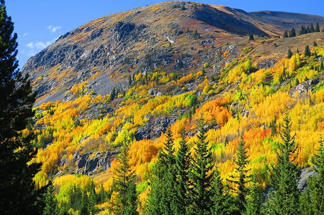 Another year of leaf peeping in Fallorado🍂