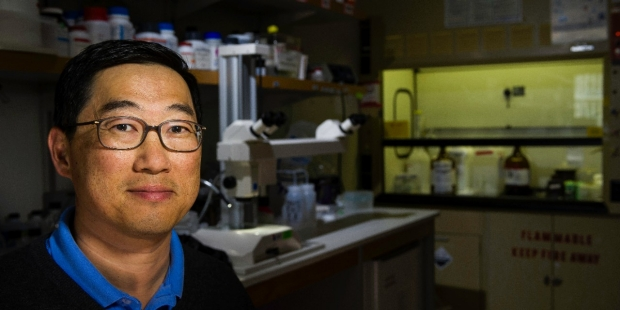 Seung Kim and his team were able to convert alpha cells from the pancreas into insulin-producing beta cells in mice. The findings may hold clues to developing treatments for diabetes. Steve Fisch