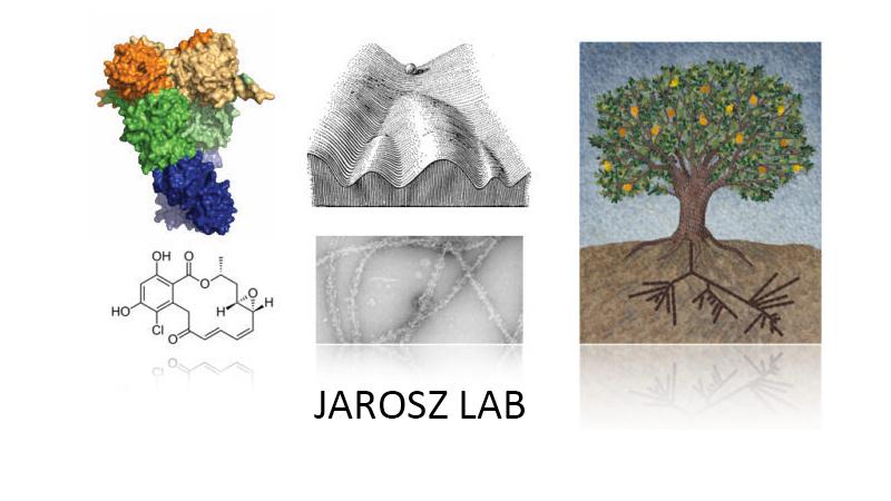 Jarosz Lab