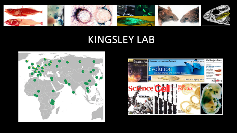 Kingsley Lab