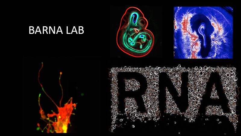 Barna Lab