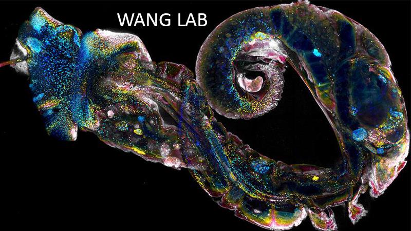 Wang Lab