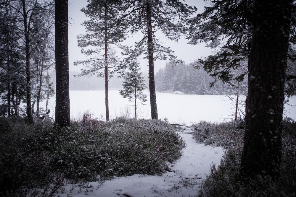 Ettermiddagsidyll i Nordmarka.