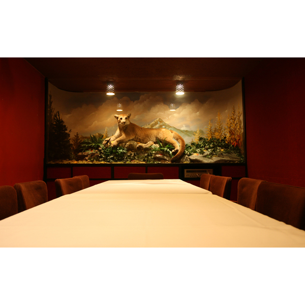 cougar_room_2.jpg