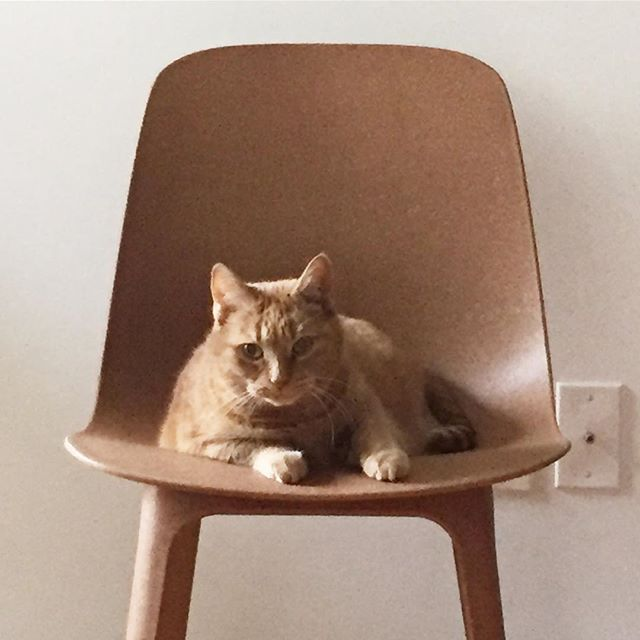 Twins #cat #chair #ikea #twins