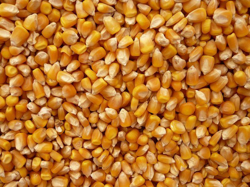 U.S. Yellow Corn
