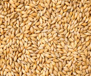 U.S. Barley