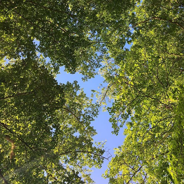 View from the picnic blanket this past weekend 🌿 #datenight #husbandandwife #whereheproposed #nature #love