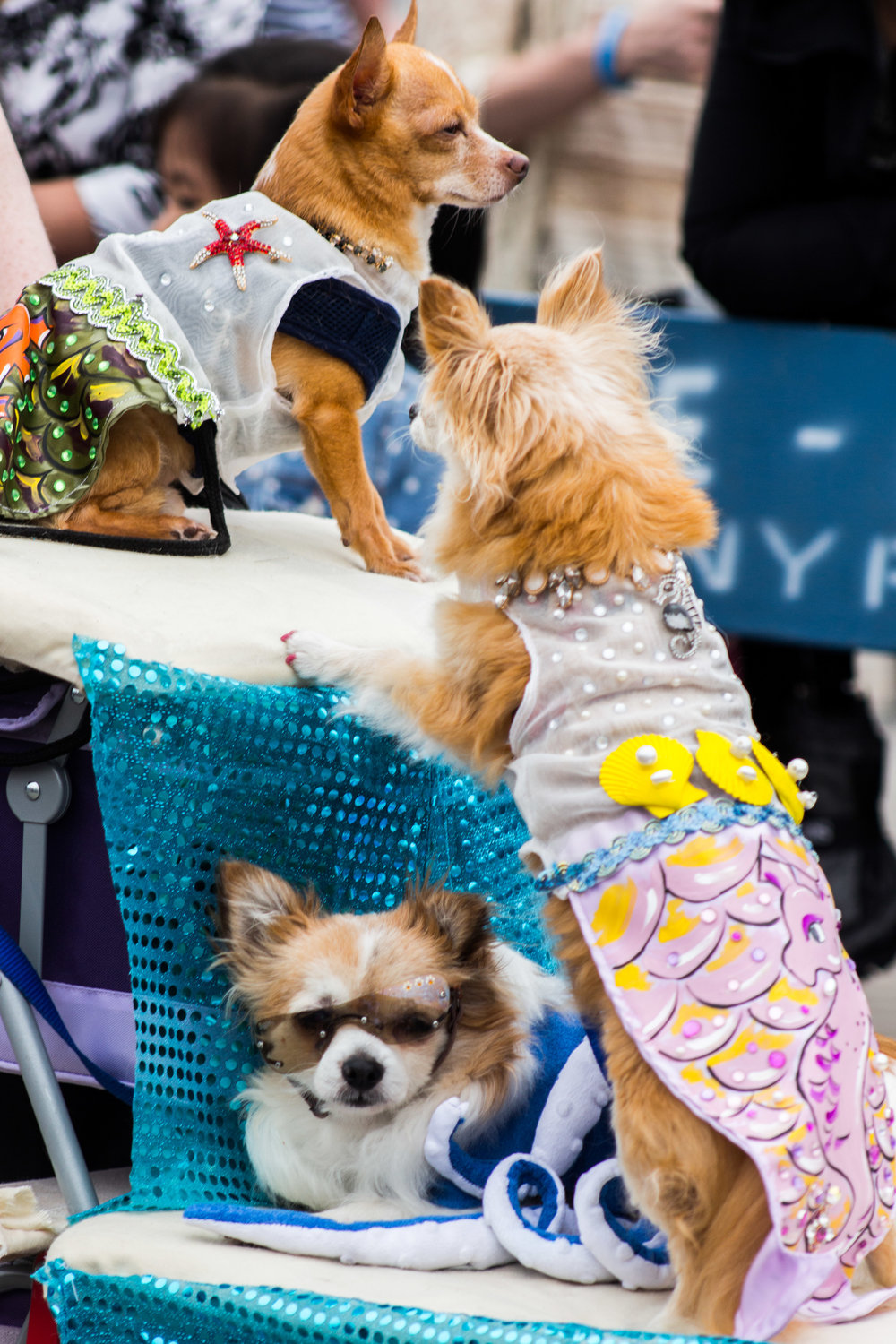 MermaidParade-114.jpg