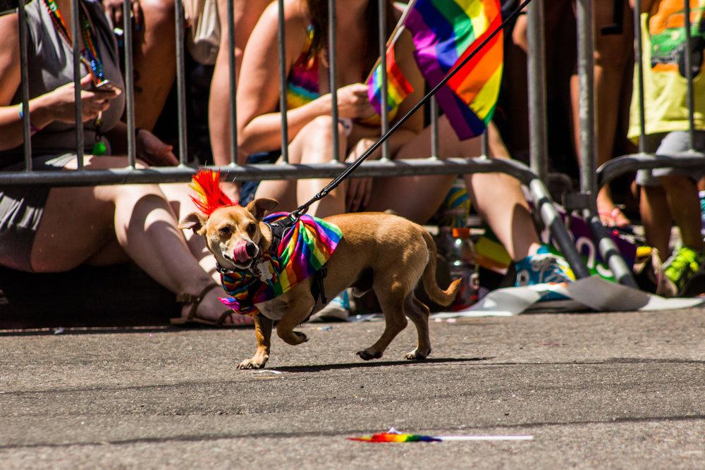 Pride-138.jpg