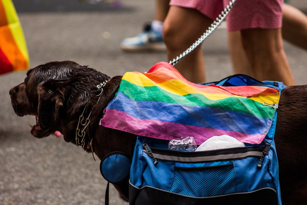 Pride-164.jpg
